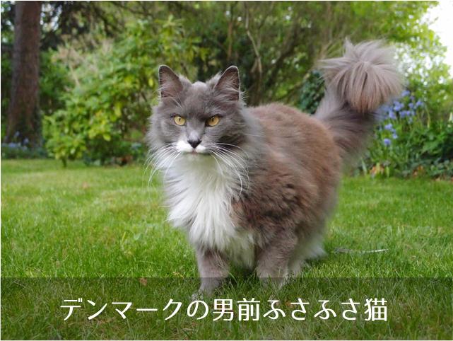 デンマークの男前猫