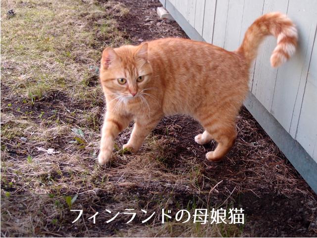 フィンランドの母子猫